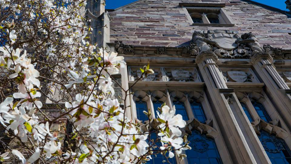 Campus beauty with white magnolias